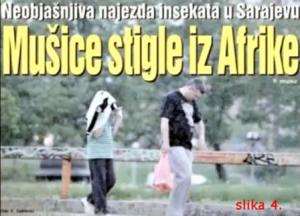 Sarajevo Harp2-muüice